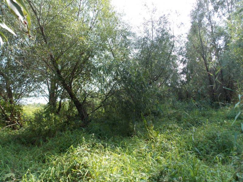 Wetland Vegetation