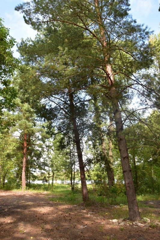 Фрагмент мішаного лісу на півострові…