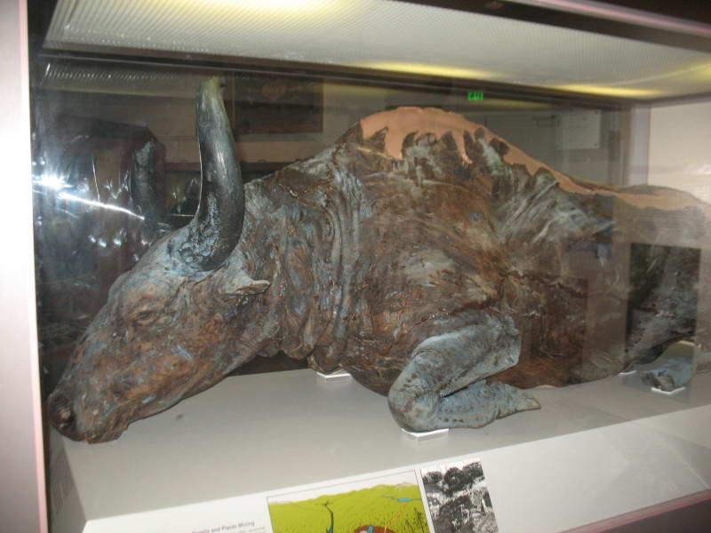 Первісний зубр (Bison priscus)
