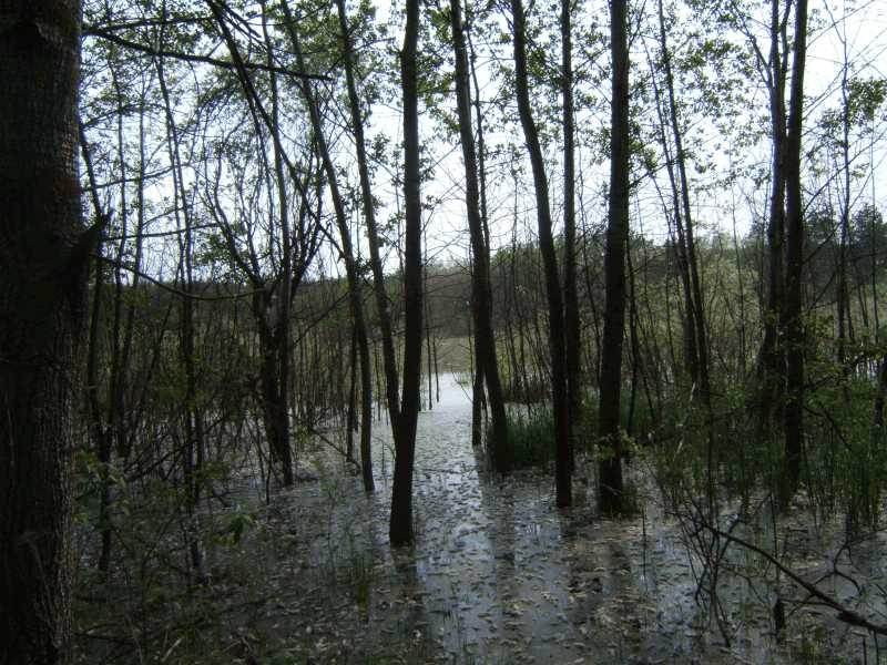 6. Lake Borove - 2006