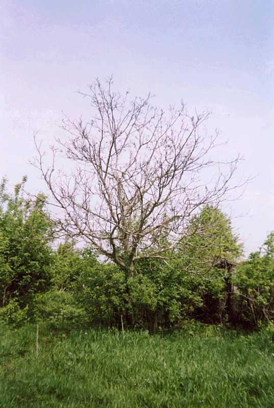 19…. и гибнут деревья